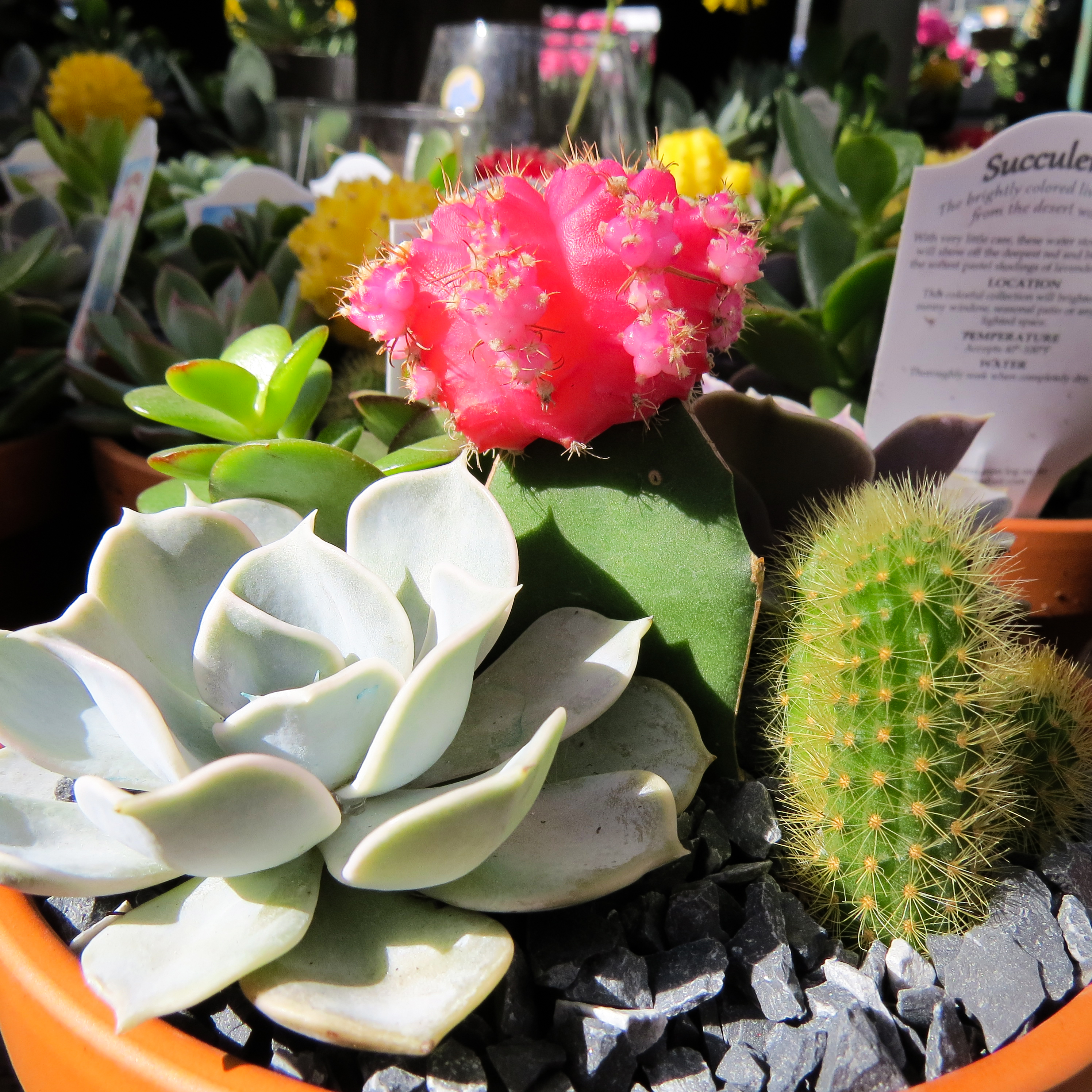 Houseplants, Succulents, and Cacti | Garden Barn