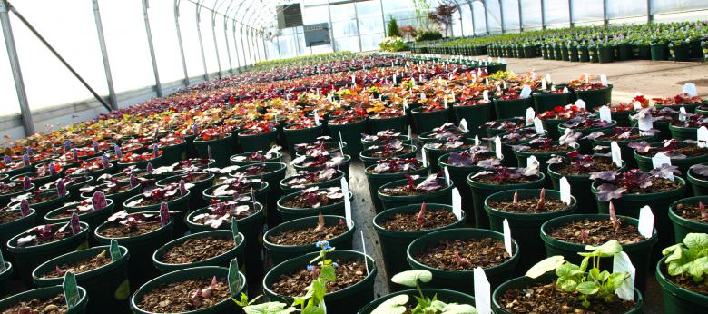 Garden Barn Grown Perennials in Production