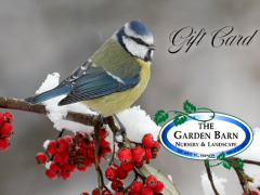 Garden Barn Gift Card - Bird On Winterberry