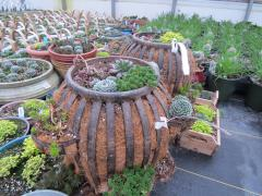 Unique Garden Barn Grown Succulent Planters