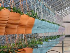 Garden Barn Grown Colorful Hanging Baskets