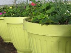 Garden Barn Grown Colorful Planters