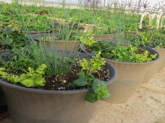 Garden Barn Grown Exquisite Planters