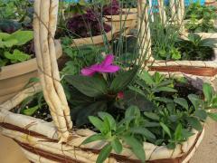Garden Barn Grown Baskets