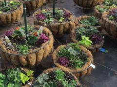 Garden Barn Grown Two Tier Planters