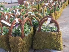 Garden Barn Grown Pansy Purses