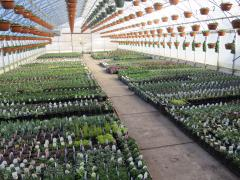 Garden Barn Grown Perennials