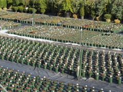 Garden Barn Perennial Production