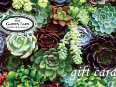 Garden Barn Gift Card - Succulents