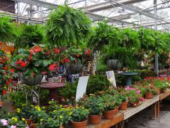 Garden Barn Annuals